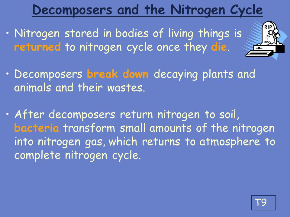 Decomposers and the Nitrogen Cycle