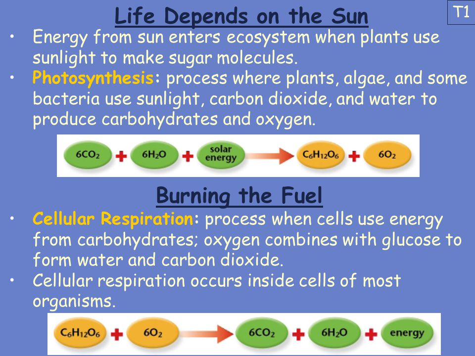 Life Depends on the Sun Burning the Fuel