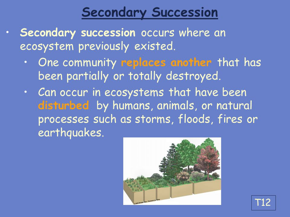 Secondary Succession Secondary succession occurs where an ecosystem previously existed.
