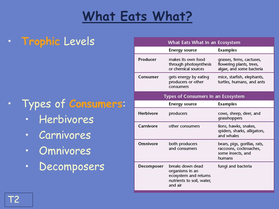 What Eats What Trophic Levels Types of Consumers: Herbivores