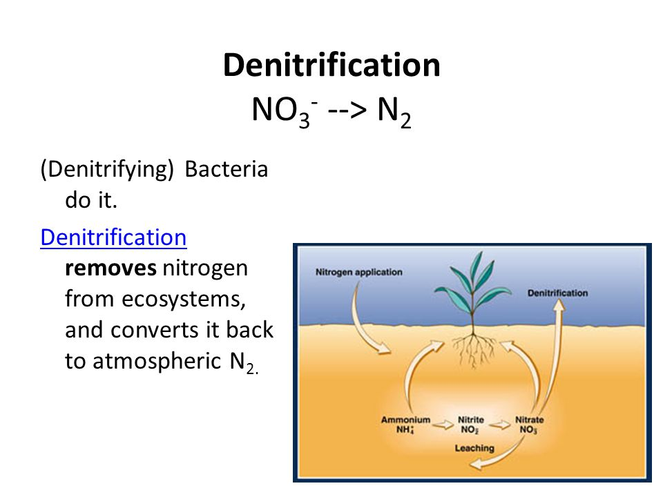 Denitrification NO3- --> N2