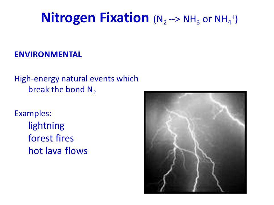 Nitrogen Fixation (N2 --> NH3 or NH4+)