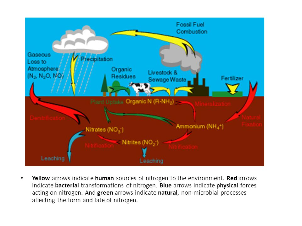 Yellow arrows indicate human sources of nitrogen to the environment