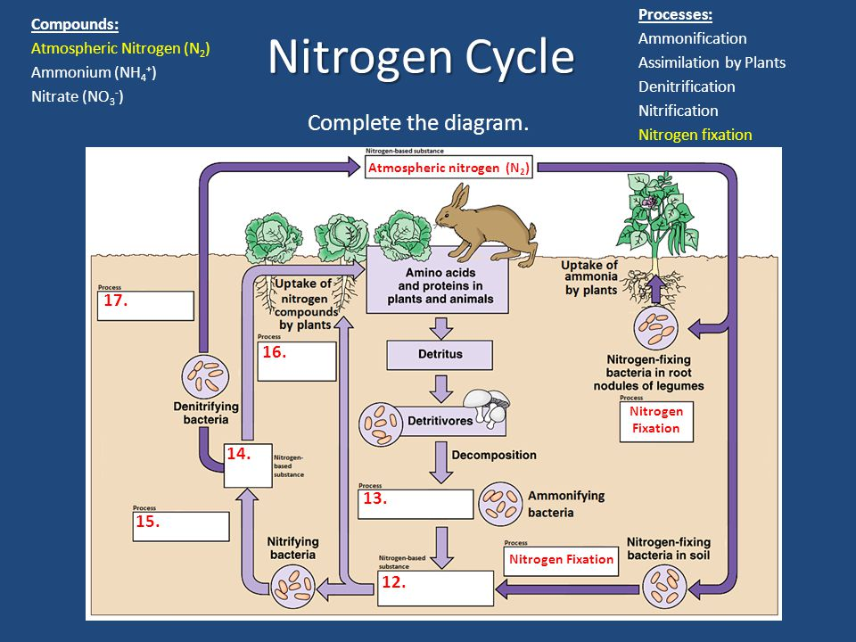 Atmospheric nitrogen (N2)