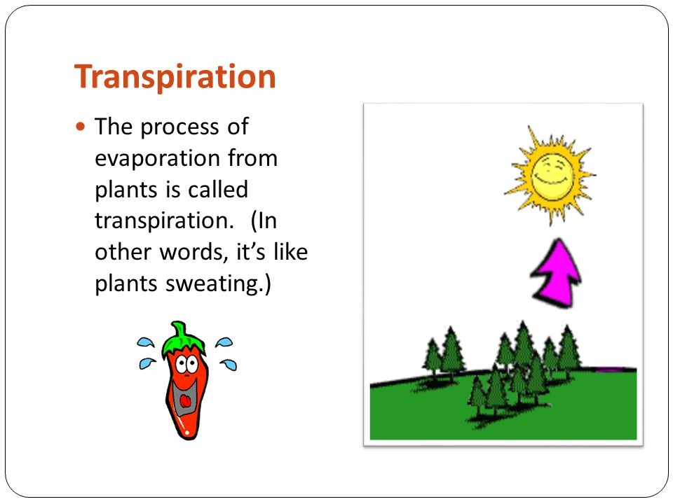 Transpiration The process of evaporation from plants is called transpiration.