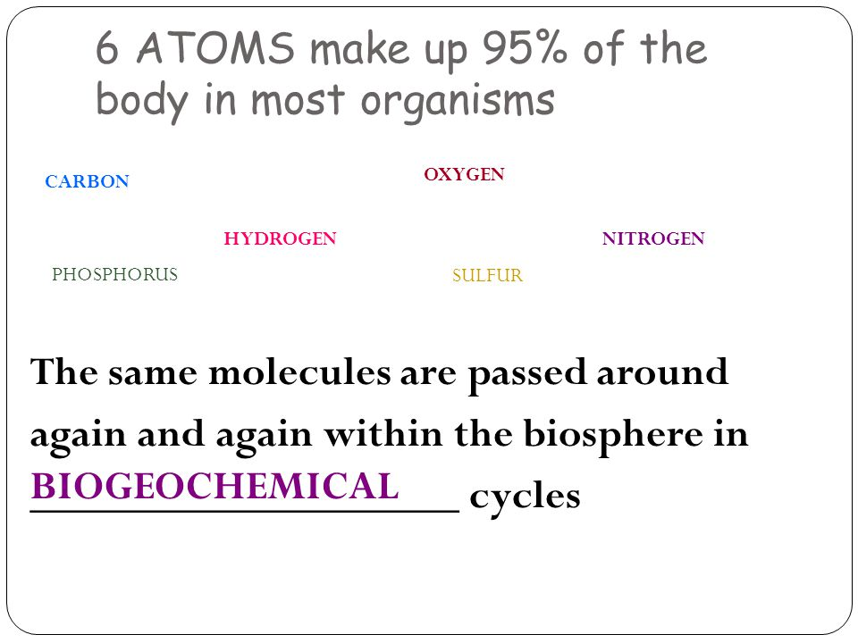 6 ATOMS make up 95% of the body in most organisms