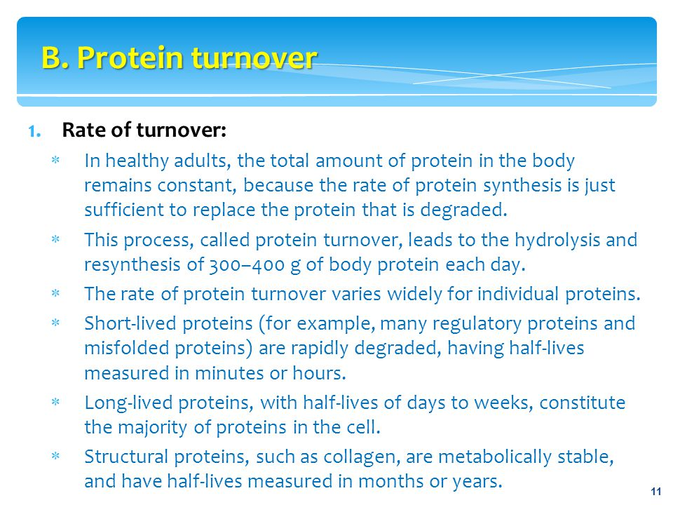 B. Protein turnover Rate of turnover: