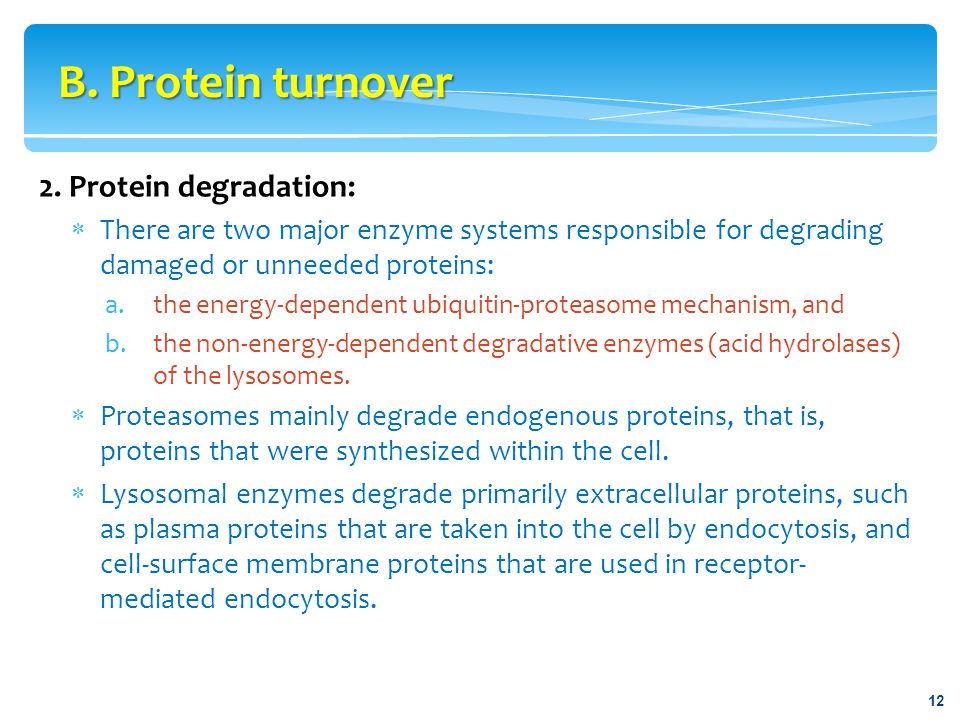 B. Protein turnover 2. Protein degradation: