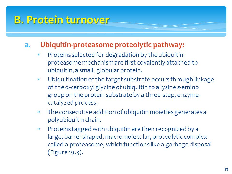B. Protein turnover Ubiquitin-proteasome proteolytic pathway: