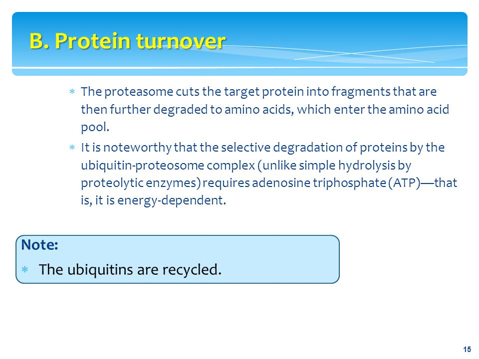 B. Protein turnover Note: The ubiquitins are recycled.