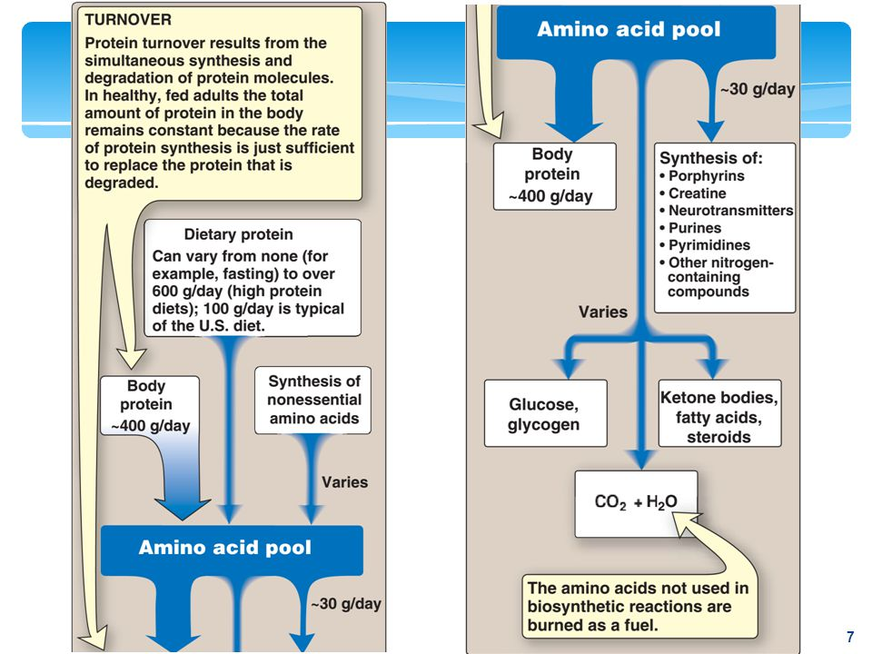 Figure 19.2 Sources and fates of amino acids