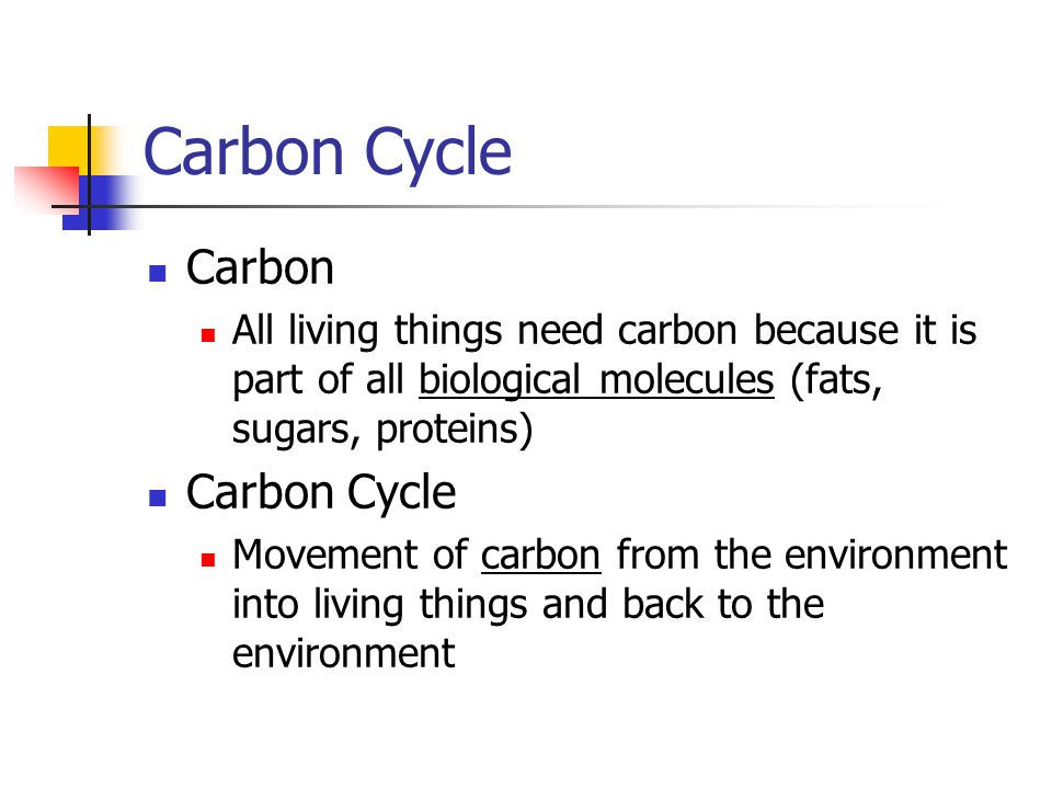 Carbon Cycle Carbon Carbon Cycle