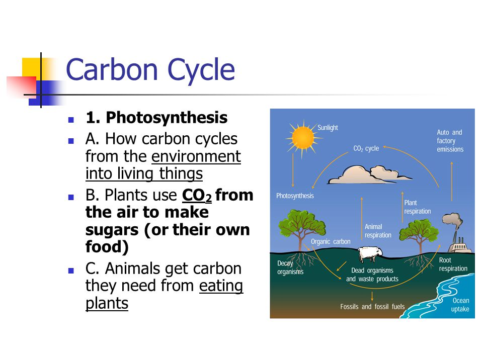 Carbon Cycle 1. Photosynthesis