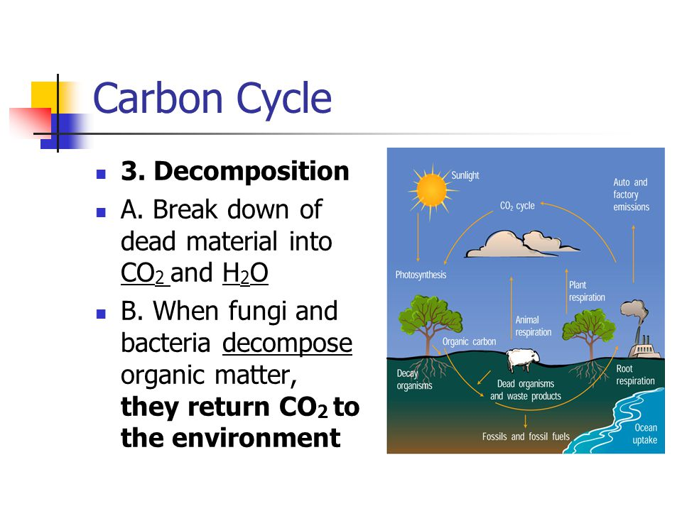 Carbon Cycle 3. Decomposition