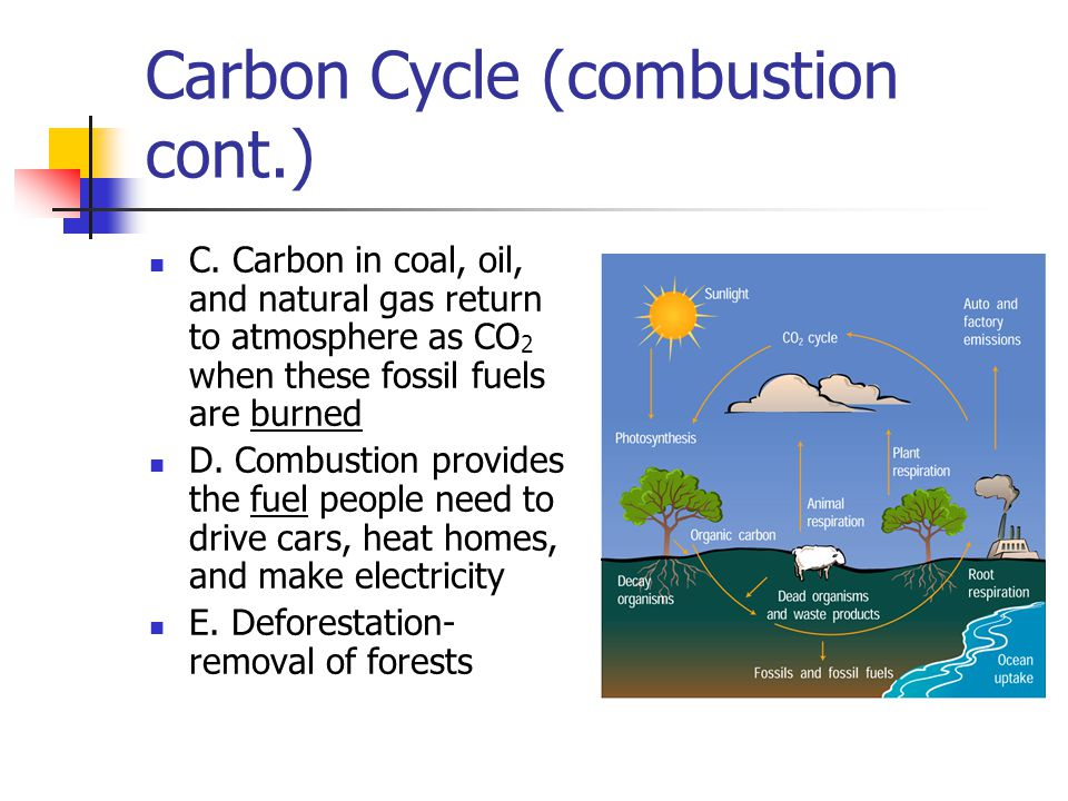 Carbon Cycle (combustion cont.)