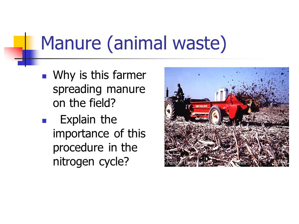 Manure (animal waste) Why is this farmer spreading manure on the field.