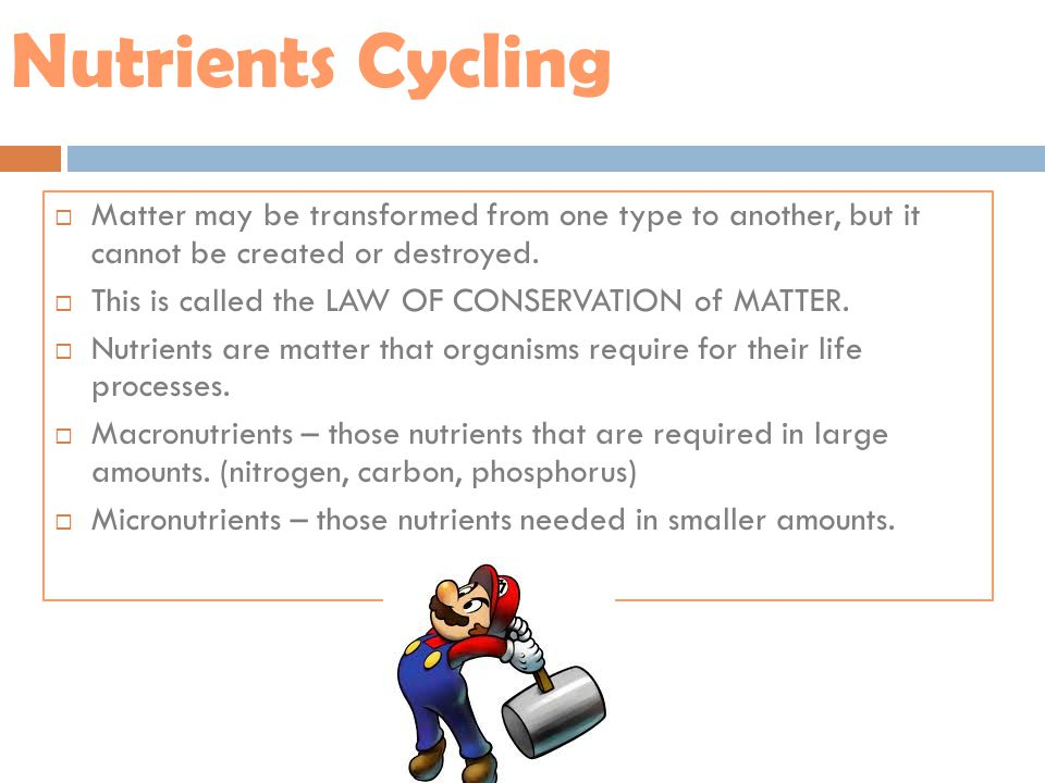 Nutrients Cycling Matter may be transformed from one type to another, but it cannot be created or destroyed.