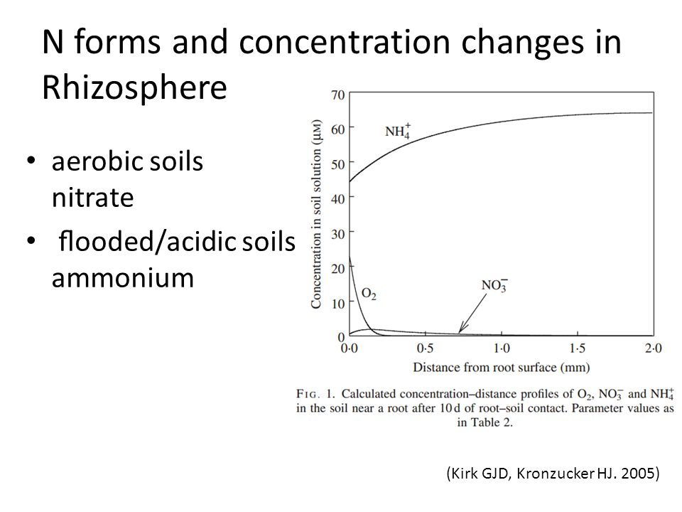 N forms and concentration changes in Rhizosphere
