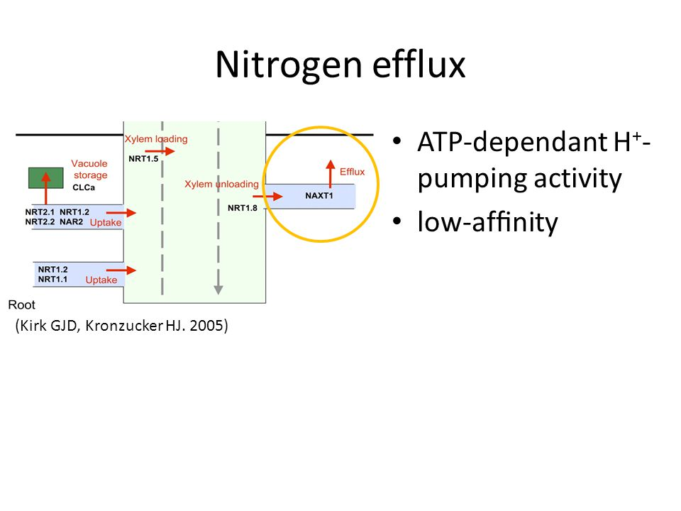 Nitrogen efflux ATP-dependant H+-pumping activity low-affinity