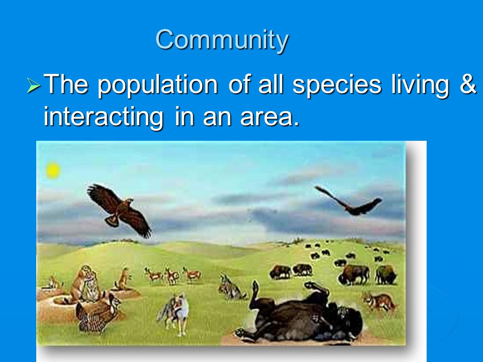 The population of all species living & interacting in an area.
