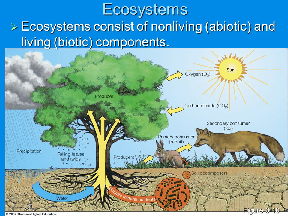Ecosystems Ecosystems consist of nonliving (abiotic) and living (biotic) components. Figure 3-10