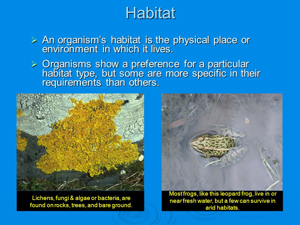 Habitat An organism's habitat is the physical place or environment in which it lives.