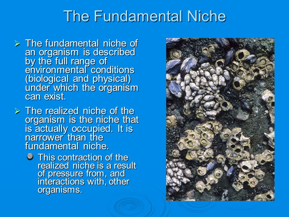 The Fundamental Niche