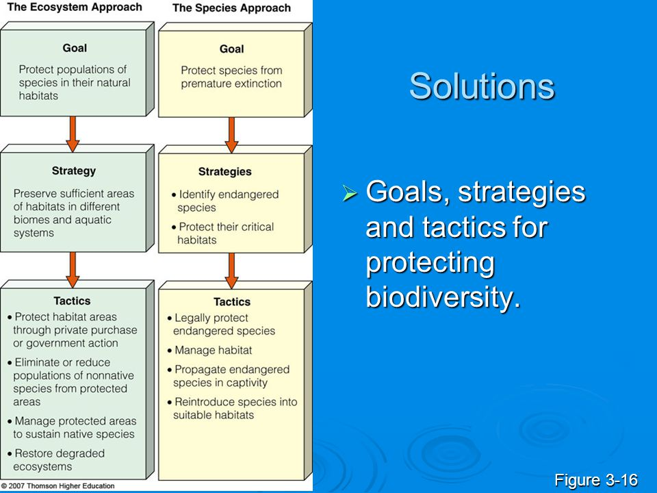 Solutions Goals, strategies and tactics for protecting biodiversity.