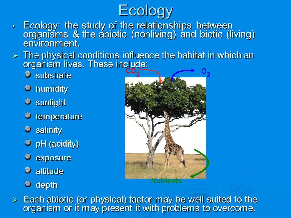 Ecology Ecology: the study of the relationships between organisms & the abiotic (nonliving) and biotic (living) environment.