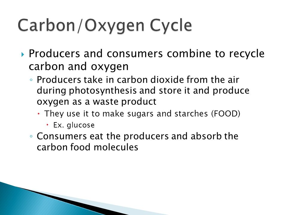 Carbon/Oxygen Cycle Producers and consumers combine to recycle carbon and oxygen.