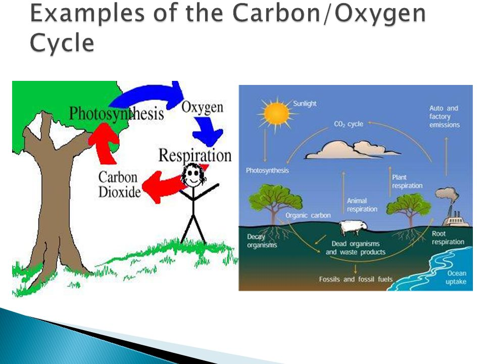 Carbon oxygen cycle boatremyeaton carbon oxygen cycle ccuart Images