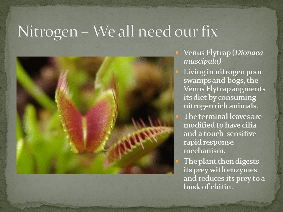 Nitrogen – We all need our fix