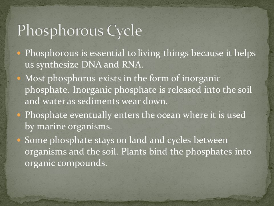Phosphorous Cycle Phosphorous is essential to living things because it helps us synthesize DNA and RNA.