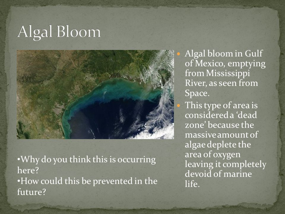 Algal Bloom Algal bloom in Gulf of Mexico, emptying from Mississippi River, as seen from Space.