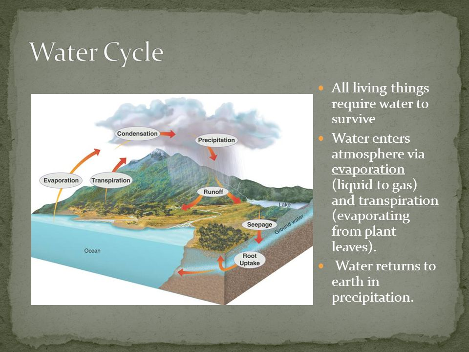 Water Cycle All living things require water to survive
