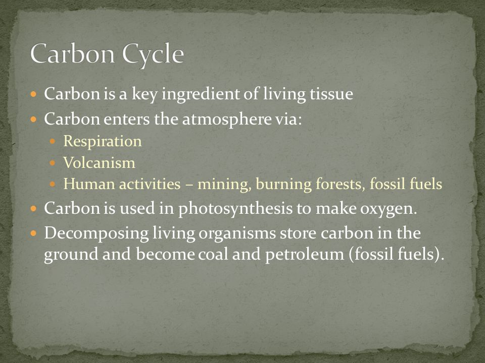 Carbon Cycle Carbon is a key ingredient of living tissue