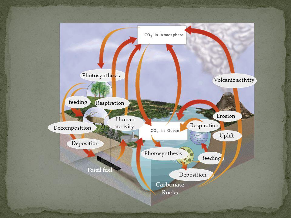 Carbonate Rocks Photosynthesis Volcanic activity feeding Respiration