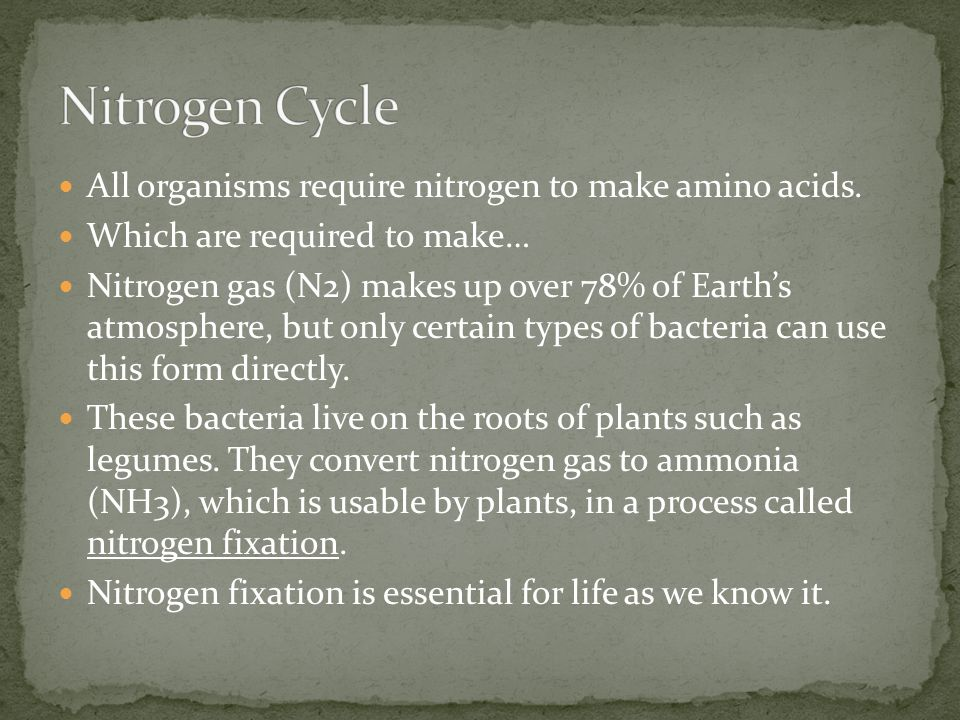 Nitrogen Cycle All organisms require nitrogen to make amino acids.