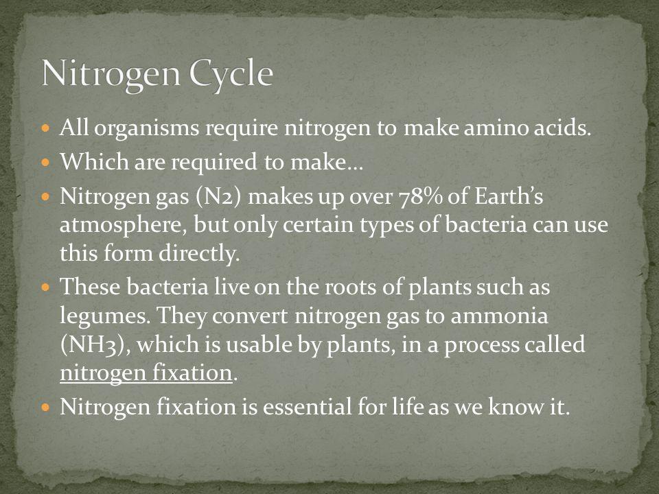 Nitrogen Cycle All organisms require nitrogen to make amino acids.