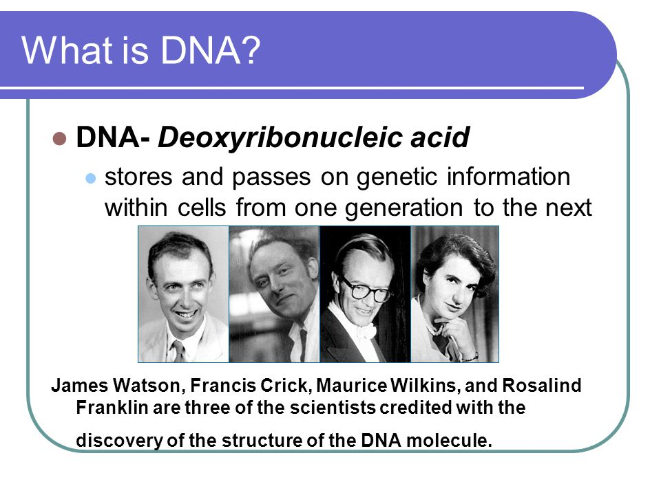 What is DNA DNA- Deoxyribonucleic acid