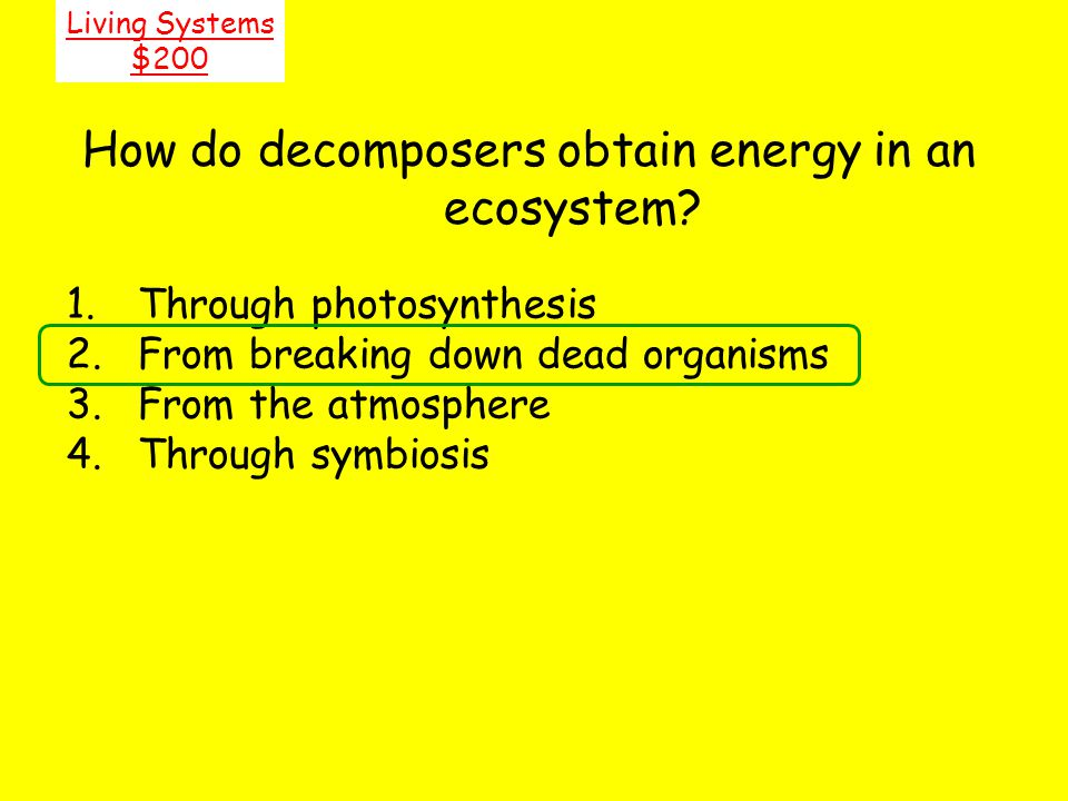 How do decomposers obtain energy in an ecosystem