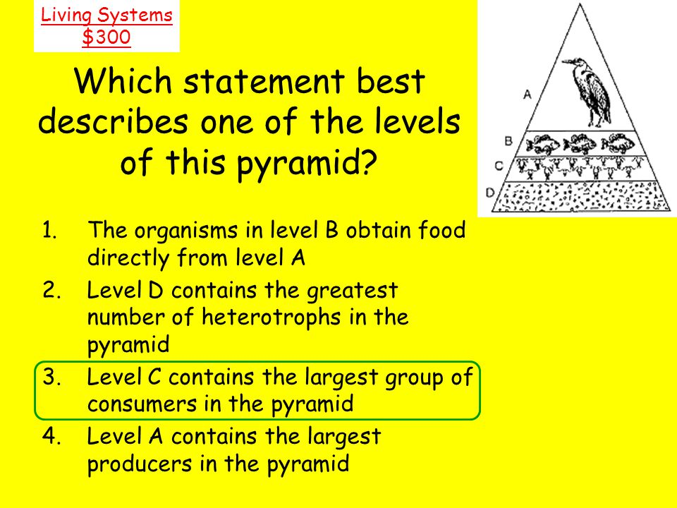 Which statement best describes one of the levels of this pyramid