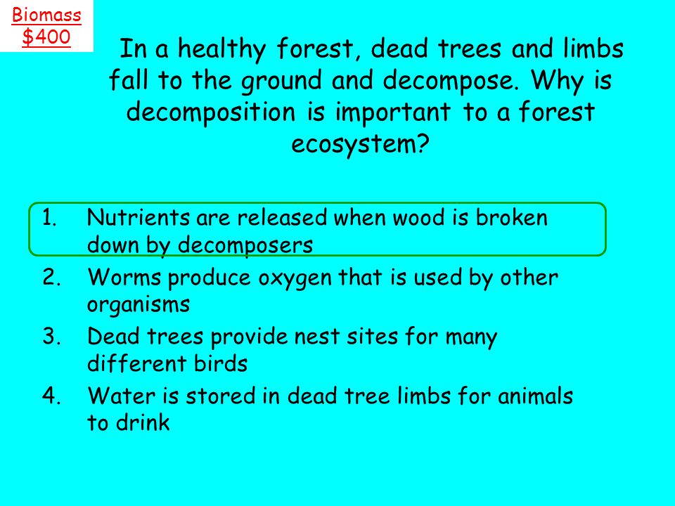 Biomass $400. In a healthy forest, dead trees and limbs fall to the ground and decompose. Why is decomposition is important to a forest ecosystem