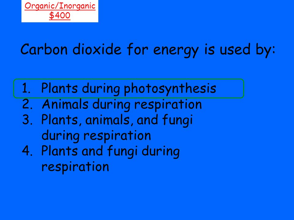 Carbon dioxide for energy is used by: