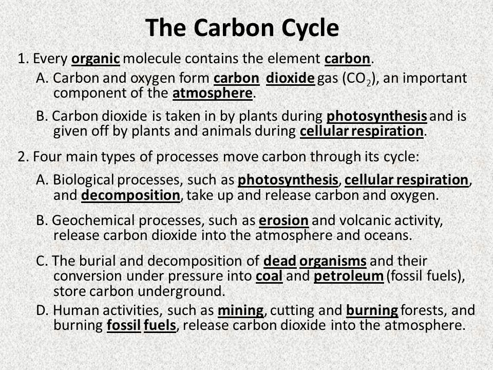 The Carbon Cycle 1. Every organic molecule contains the element carbon. A. Carbon and oxygen form carbon dioxide gas (CO2), an important.