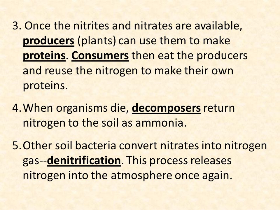 3. Once the nitrites and nitrates are available, producers (plants) can use them to make proteins. Consumers then eat the producers and reuse the nitrogen to make their own proteins.