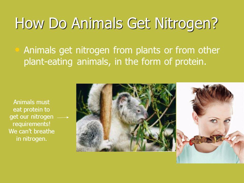 How Do Animals Get Nitrogen