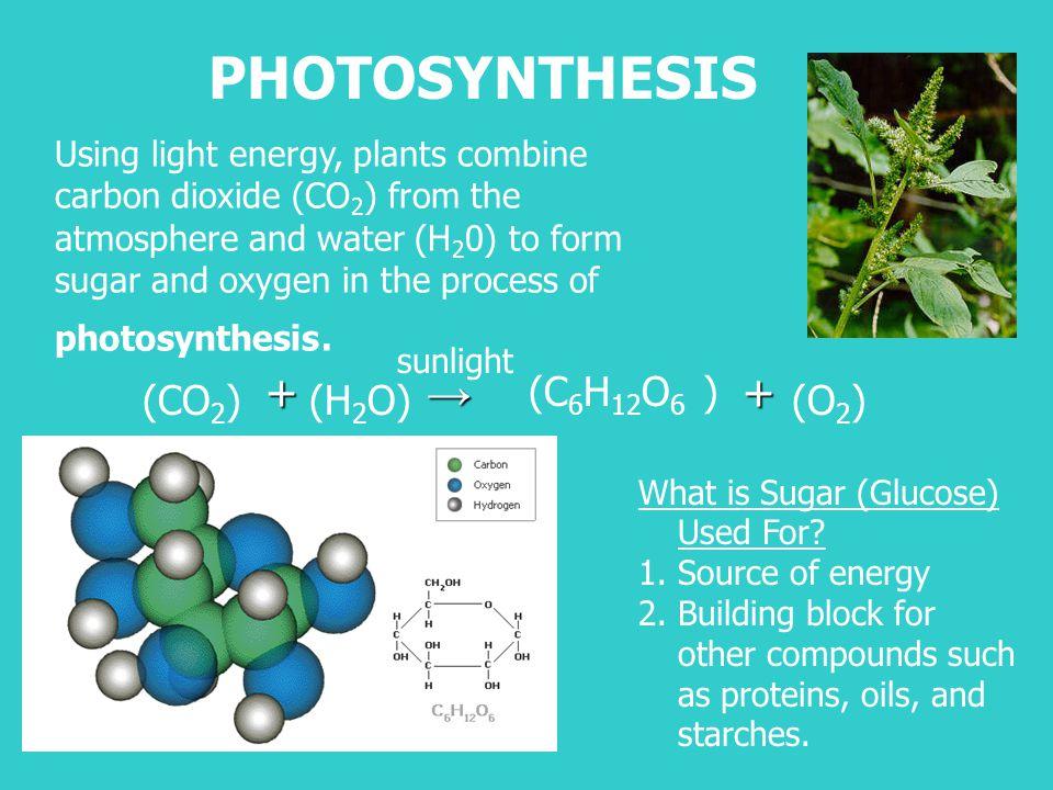 PHOTOSYNTHESIS + → + (C6H12O6 ) (CO2) (H2O) (O2)