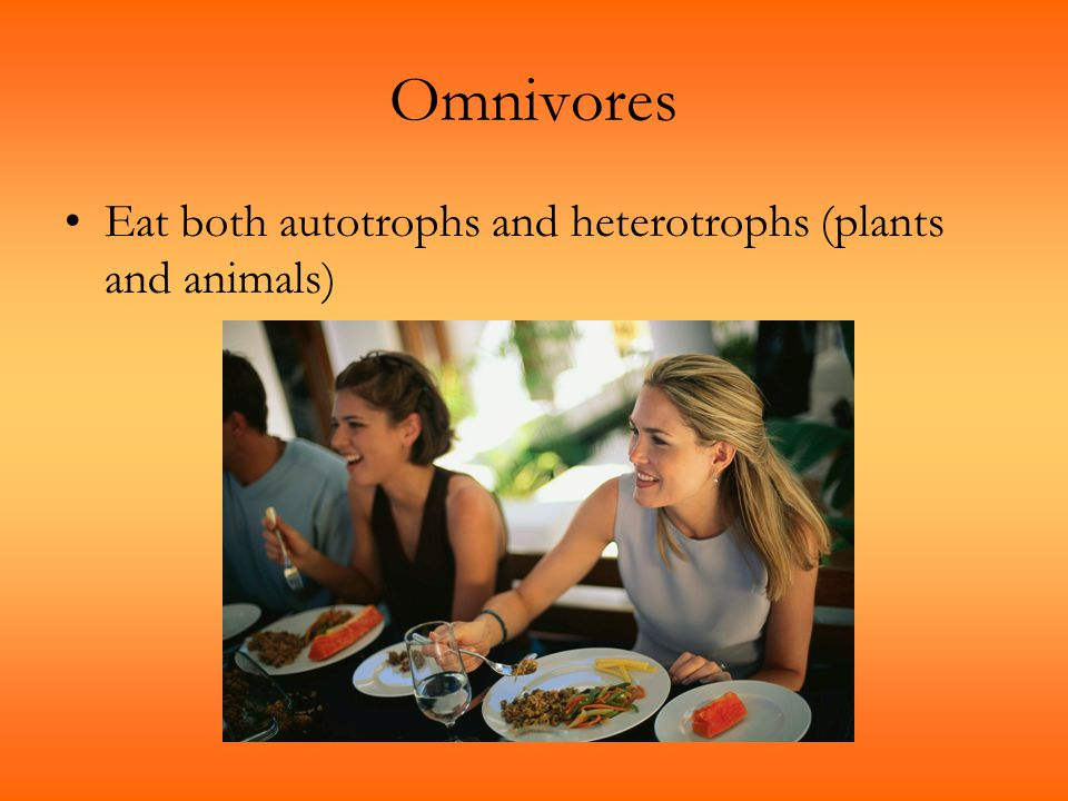 Omnivores Eat both autotrophs and heterotrophs (plants and animals)