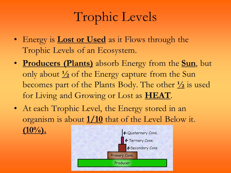 Trophic Levels Energy is Lost or Used as it Flows through the Trophic Levels of an Ecosystem.